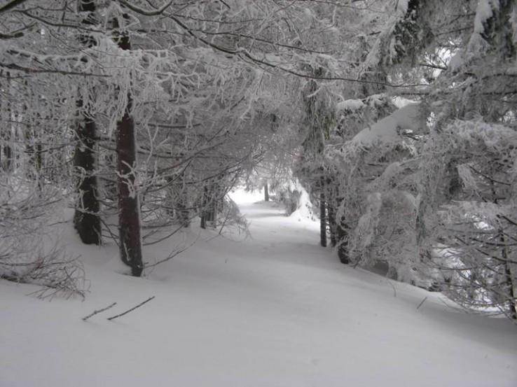 Snežným tunelom