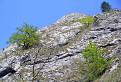 Stromy na skale