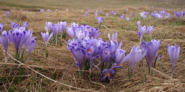 Jar na Geravách