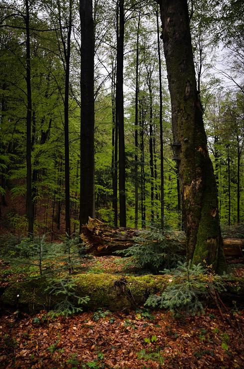 Stužickým lesom