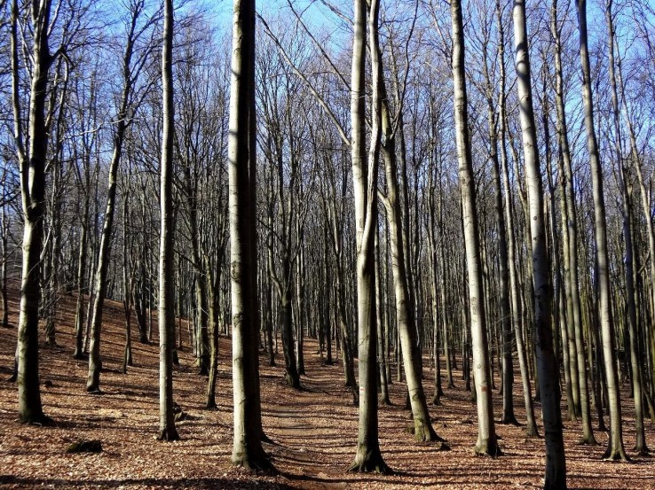 Jarní ranní les