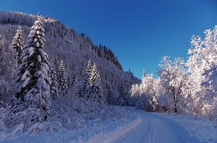 V Zimuškinom kráľovstve