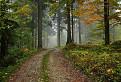 Javornícky les