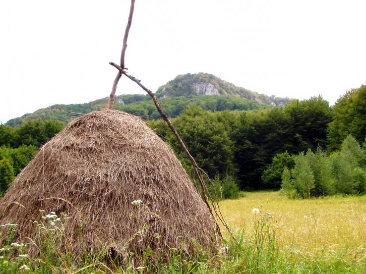 Až bude pokosená tráva...