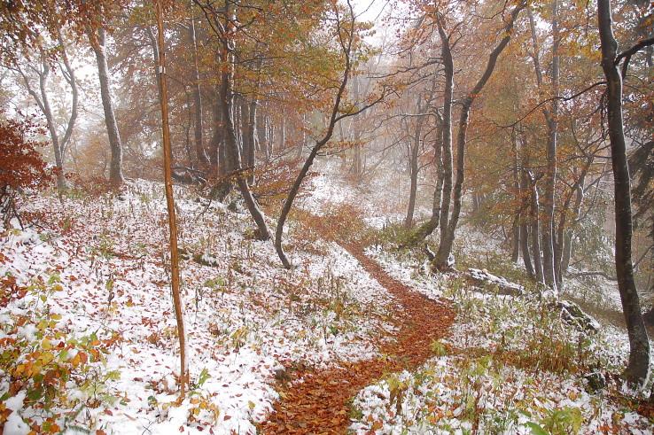 jeseň pred zimou hlávku skloní