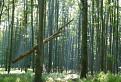 les v obore