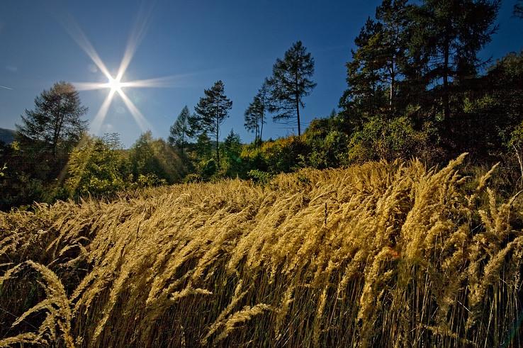 V jesenných trávach