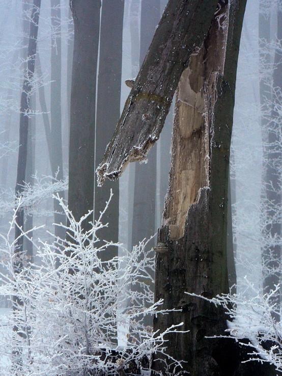 Detail zo zimného lesa