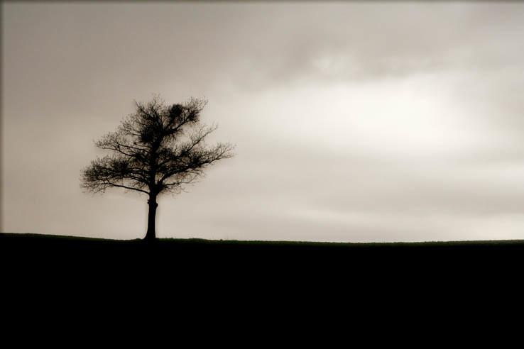 Posledný strom