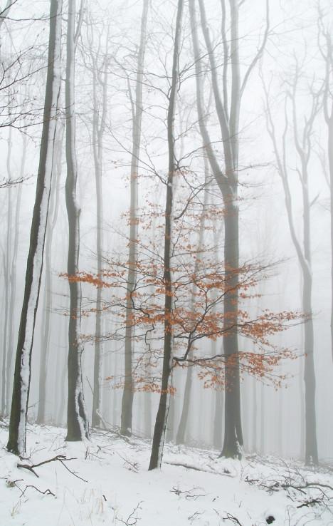 Zahmlené Karpaty