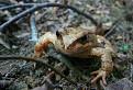 Žabka...