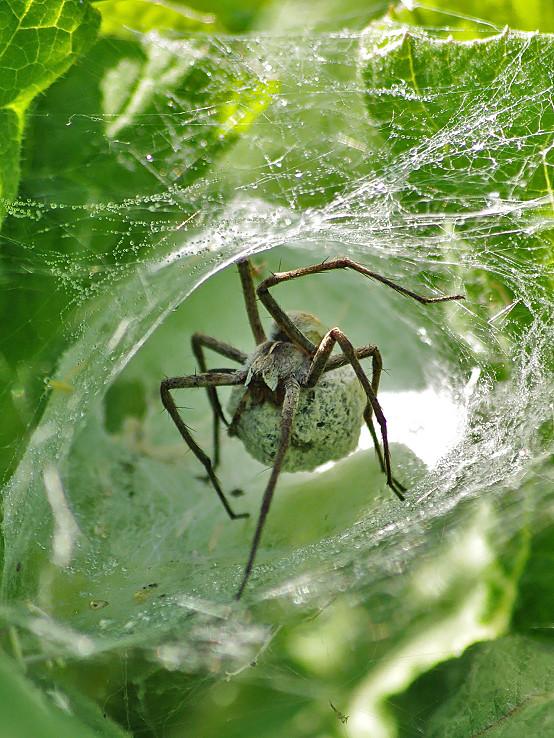 Pavúčí príbytok