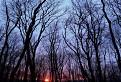 Cez stromy / 1.4375