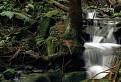 Spev potoka