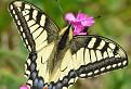 Motýlia rozmanitosť