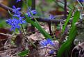 Vôňa jari v sedle pod Gýmešom