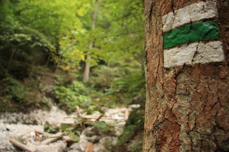 Po zelenej