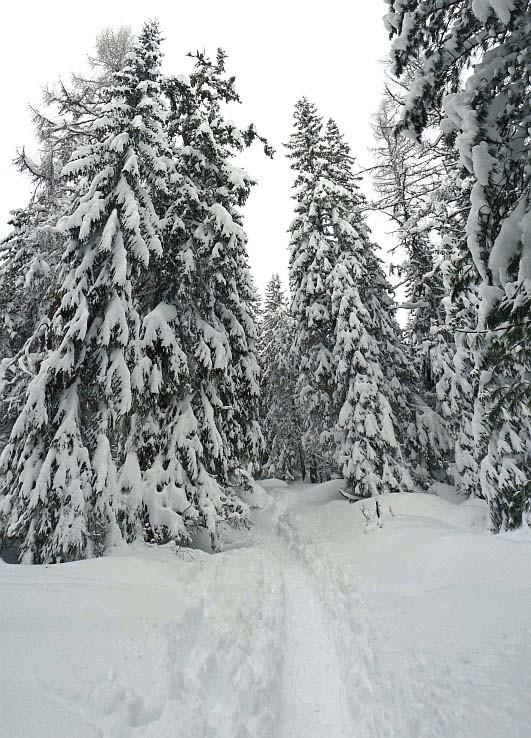 Pod snehovou ťarchou