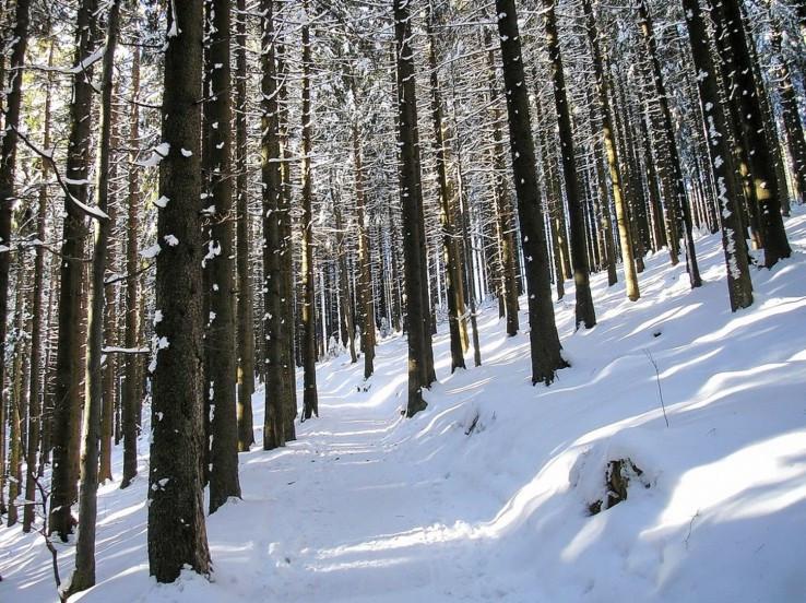 Cestou cez zimný les