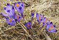 Pozdrav jari