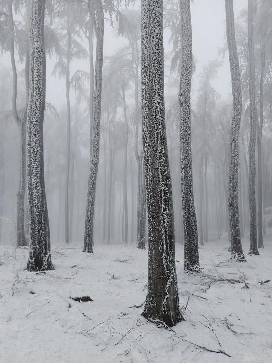 Malokarpatská zima