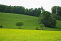 fotografia pohltená zelenou farbou..