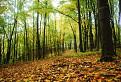mystérium jesenného lesa