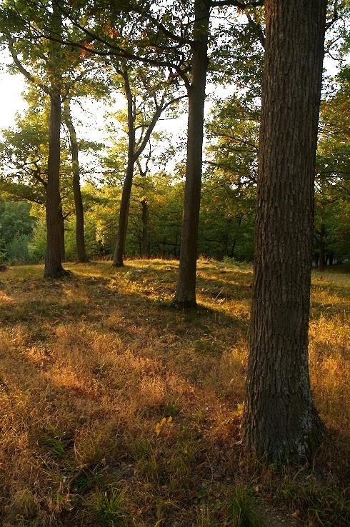 V lese nad Modrou