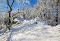 Stromy snehom vyšívané