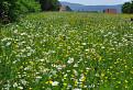 Plné kvetov  / 1.1111