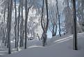 Zimná krása / 1.0286