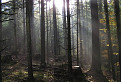 Starovodský les