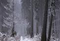 Zimný les
