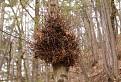Niečo žije na strome...