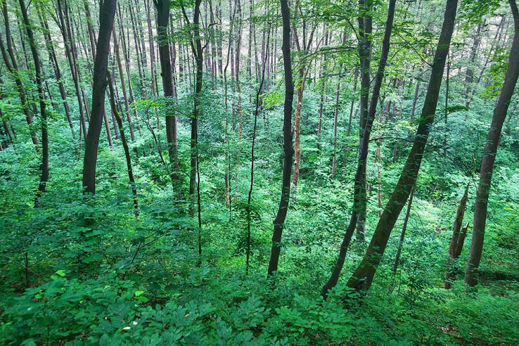 Lužný les pri Hrone