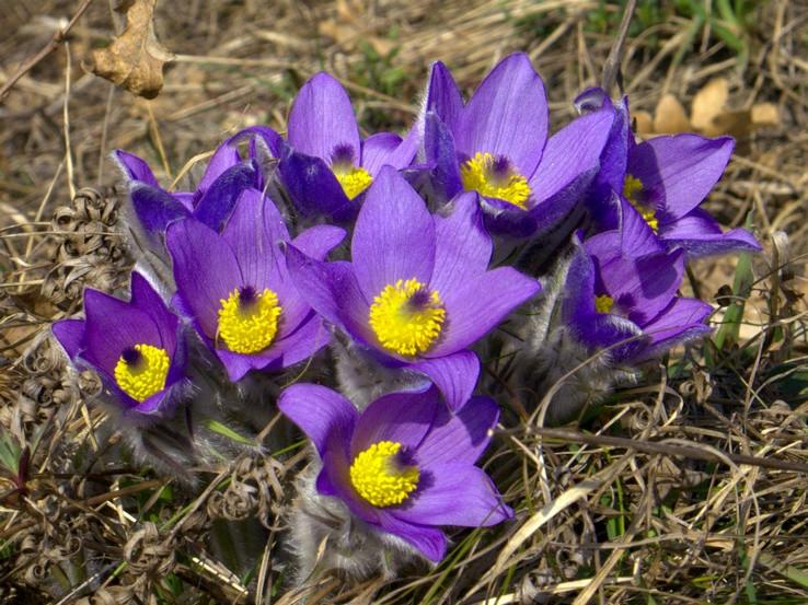 Príspevok do jarnej kytice