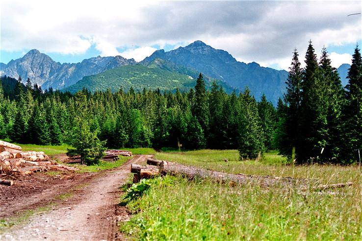 Vysoké Tatry od Tatranskej Javoriny