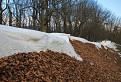 snehovo - listnaná hrebeňovka