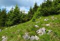 Vábenie prírodnej rezervácie