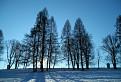 Zimná urpínska alej