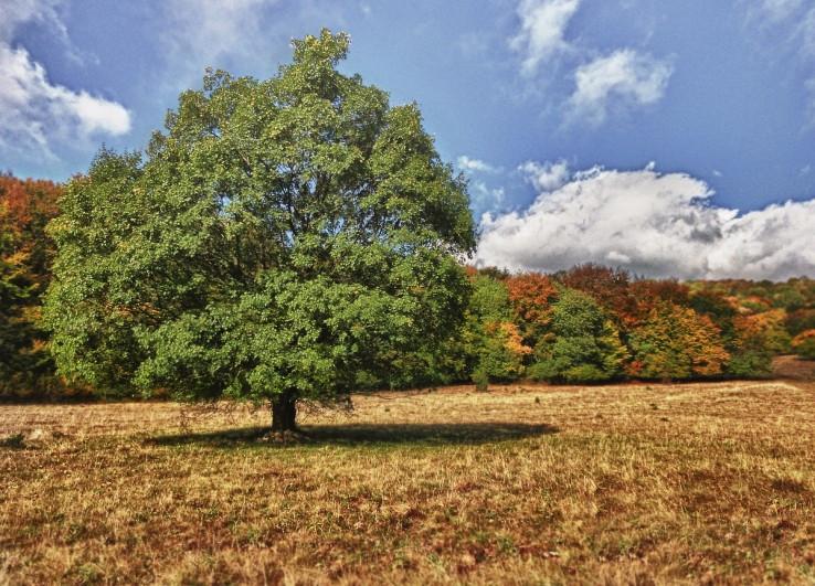 Jeseň na Zádielskej planine