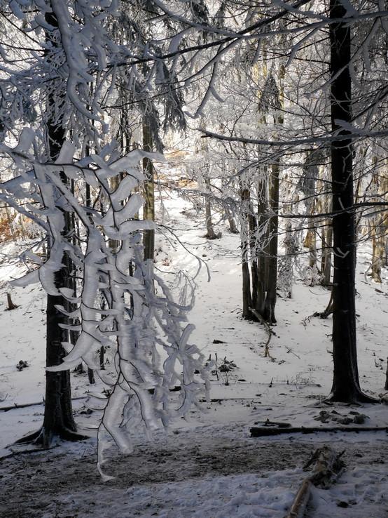 Novembrová zima