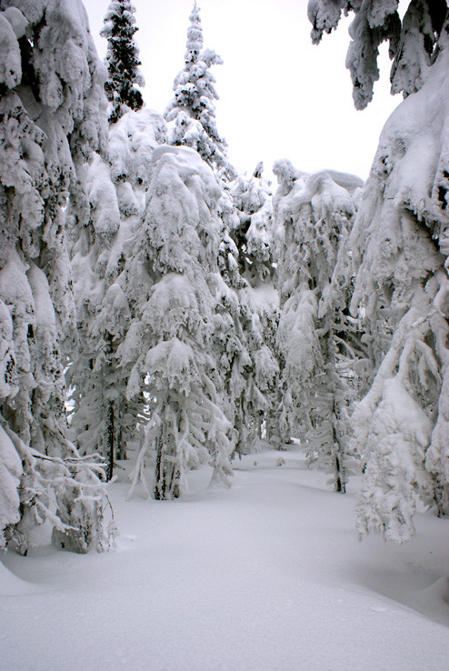 V zajatí snehu