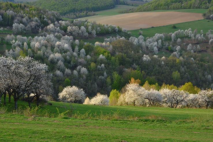 Jar sa chce bielou zime vyrovnať