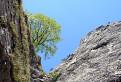Strom-horolezec