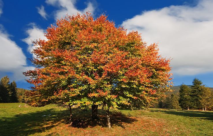 Jeseň na Oraviciach