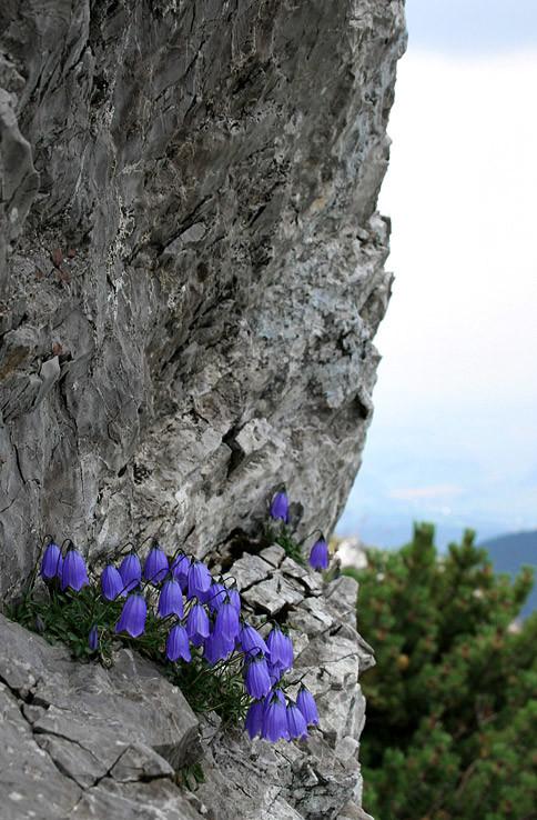 Aj na skale sa udržia ...