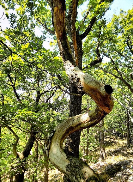 Hadi strom