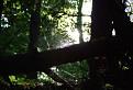 v hlbinách lesa