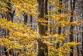 strom farby slnka
